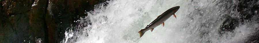 Ecotrust newsletter Fall 2010
